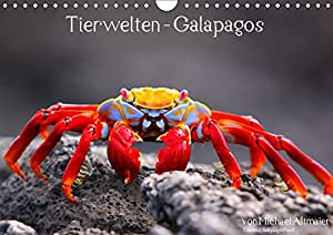 tierwelten galapagos fotokalender mit. Black Bedroom Furniture Sets. Home Design Ideas