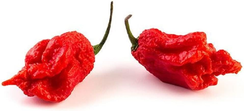 what is the hottest pepper in the world today