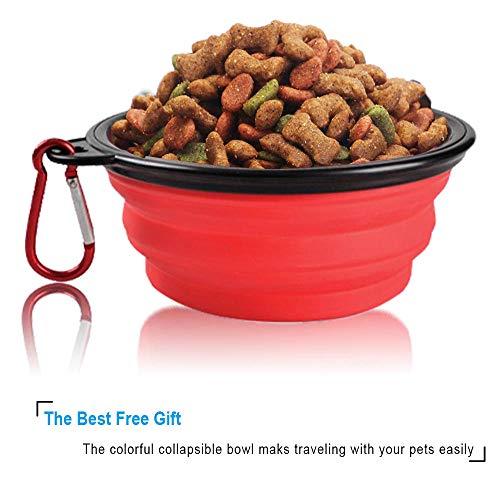 Buy slow feed dog bowl