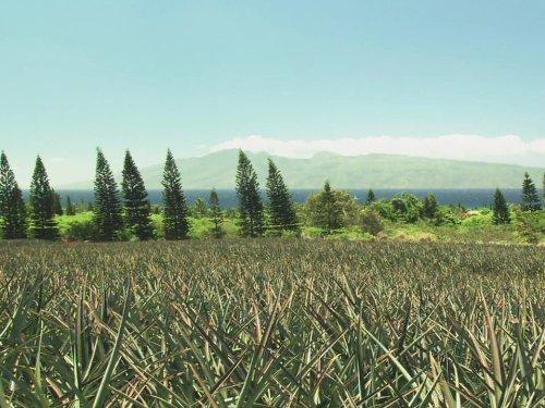 Maui & Hawaii's Big Island