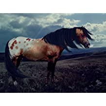 Appy war horse - Art Print on Canvas (28x20 inches , unframed)