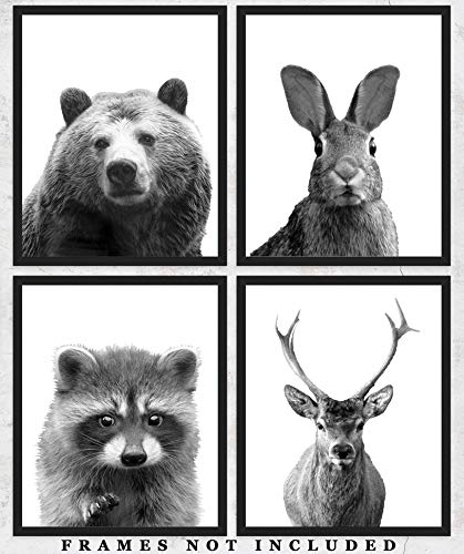 Woodland Animals Wall Art Prints: Adorable Nursery Room Decor - Set of Four (8x10) Unframed Pictures - Great Gift Idea for Nursery and Kids Room Under -