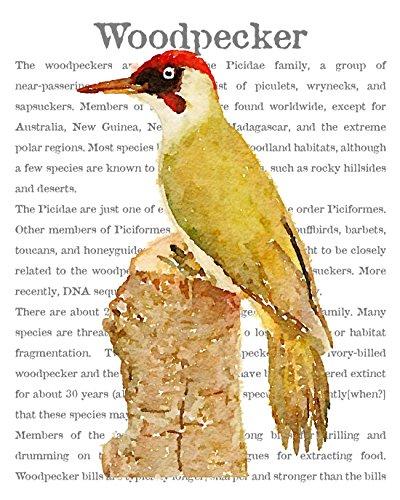 Victorian Audubon Bird Decor,Perched Woodpecker Overlaid on Encyclopedic Text. A Classic Old World Charm Fine Art Print. (11x14) ()