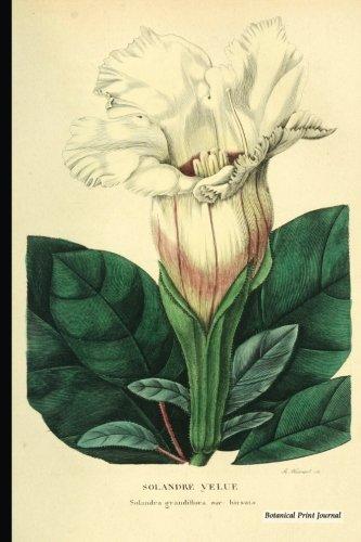 Botanical Print Journal: solandra grandiflora hirsuta, 6