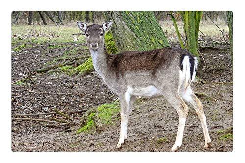 (Tree26 Indoor Floor Rug/Mat (23.6 x 15.7 Inch) - Roe Deer Forest Fallow Deer Nature Wild Animal 2)
