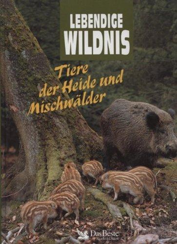 Lebendige Wildnis. Tiere der Heide und Mischwälder. Schleiereulen, Wildschweine, Bienenfresser, Buntspechte, Hasen, Eichehähler, Ginsterkatzen, Bienen.