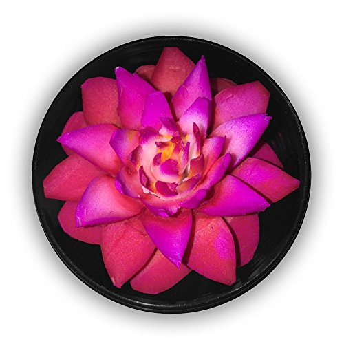 """Thai Express Hand-Carved Soap Flower, 3"""" Scented Soap Carving Gift-Set, Red/purple, Purple/blue, D in a round hand-painted/stamped case (Red/Purple) by Thai Express"""