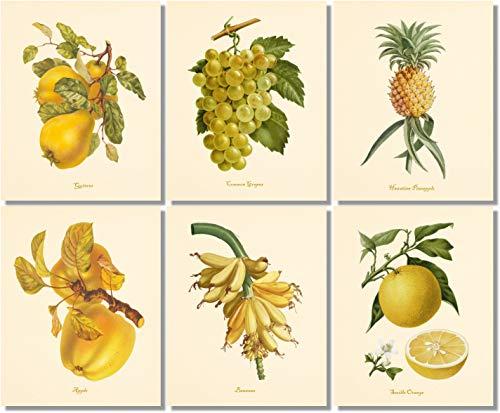 Botanical Wall Art- Vintage Fruit (Set of 6) - Bananas Pear Lemon