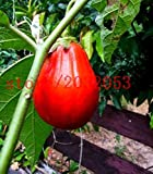buy NP mart-200 eggplant seeds EXOTIC RED EGGPLANT SOLANUM MELOGENA ORGANIC NON GMO vegetable seeds for GARDEN. now, new 2018-2017 bestseller, review and Photo, best price $9.99