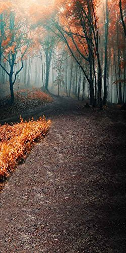 GladsBuy Woods Road 10' x 20' Digital Printed Photography Backdrop Halloween Theme Background YHA-420 by GladsBuy