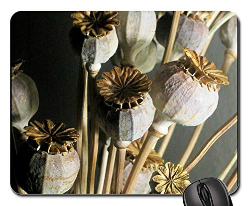 Price comparison product image Mouse Pad - Seed Pods Poppy Dried Bleached Textured Natural