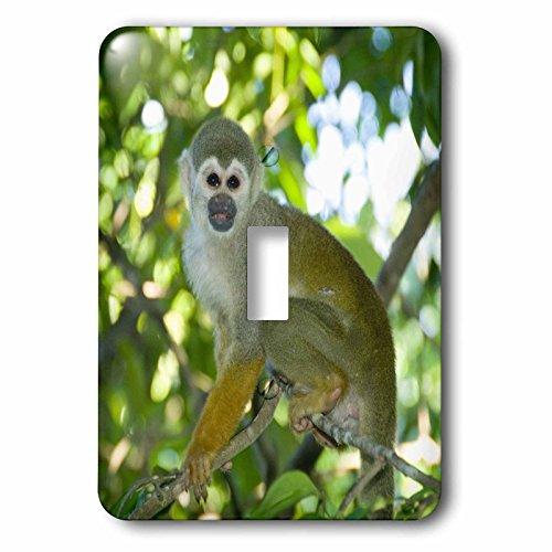 (3dRose LLC lsp_85737_1 Common Squirrel Monkey, Rio Negro, Amazon, Brazil Sa04 Ksc0010 Kevin Schafer Single Toggle Switch)