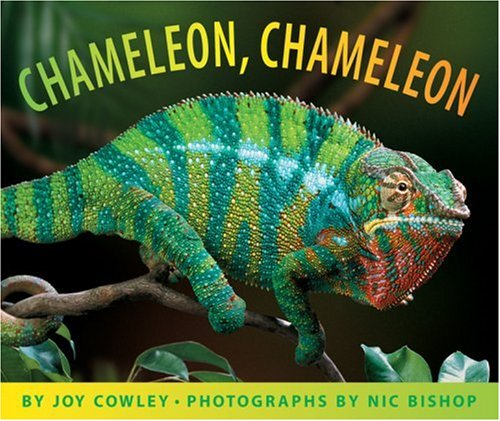 Image result for chameleon
