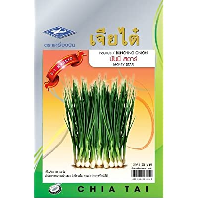 "Bunching Onion (450 Seeds)""money Star"" F1-hybrid Seeds - 1 Package From Chia Tai, Thailand : Vegetable Plants : Garden & Outdoor"