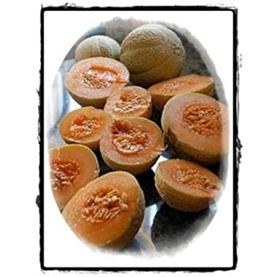 6.3g Minnesota Midget Melon Seeds ~250 Ct Heirloom Sweet Miniature Sweet Fruits : Garden & Outdoor