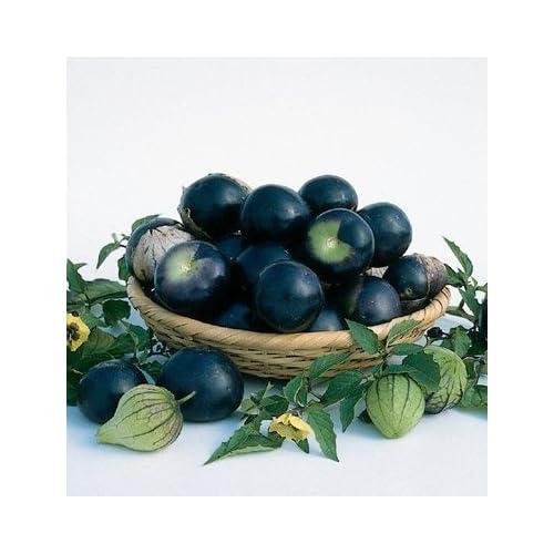 Discount David's Garden Seeds Tomatillo De Milpa D2075AT (Purple) 100 Organic Seeds