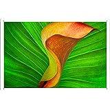 """Planet Scene Poster - Orange Calla Lily Tin Sign (8""""x12"""")"""