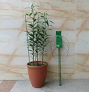 Heavy Duty Tomate y plantas Jaula plant-staking sistema