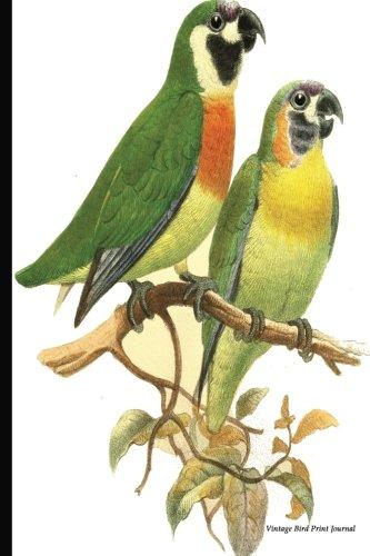 Vintage Bird Print Journal: Orange-breasted Fig-Parrot, 6