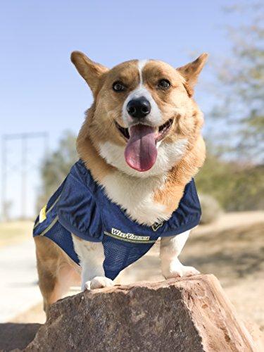 NCAA WEST VIRGINIA UNIVERSITY MOUNTAINEERS DOG Jersey, X-Large