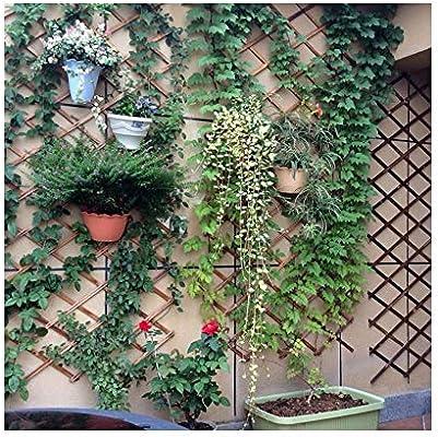 LYN%%LYN Valla Instantánea Retráctil, Panel De Malla De Madera para Jardín Exterior Familiar Borde De Césped Al Aire Libre 0703WL: Amazon.es: Hogar