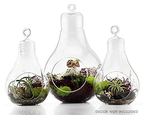 Light Bulb Glass Terrarium Set of 3 Pieces (1 Large & 2 Small); Planters for Air Ferns, Succulents and (Large Flat Planter)