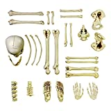 Halloween Haunters 28 Piece Bag of Plastic Life Size Skeleton Skull Bones Prop Decoration - Scary Graveyard Human Body Parts Set - Hands, Feet, Arms, Legs, Ribs, Hips, Spine, Vertebrates