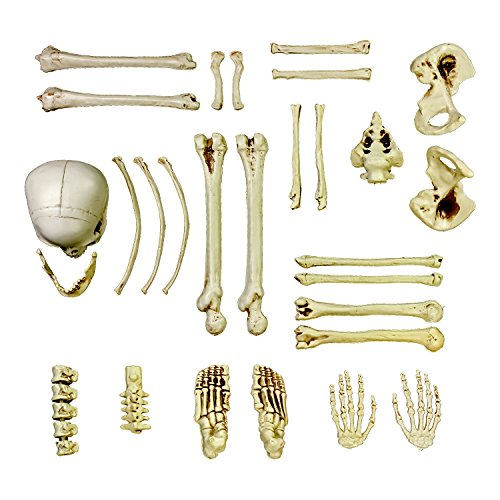 Halloween Haunters 28 Piece Bag of Plastic Life Size Skeleton Skull Bones Prop Decoration - Scary Graveyard Human Body Parts Set - Hands, Feet, Arms, Legs, Ribs, Hips, Spine, Vertebrates -