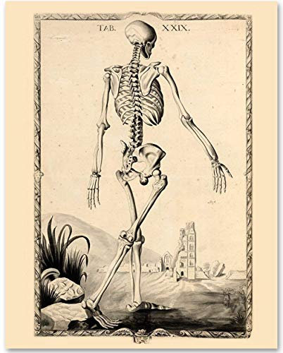 Skeleton - Tab XXIX - 11x14 Unframed Art Print - Makes a Great Gift Under $15 for Medical and Nursing Students ()