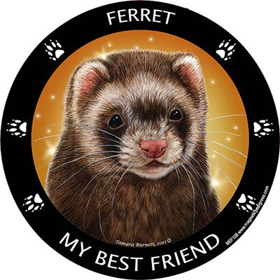 Ferret My Best Friend Magnet (Bestfriend Costumes)