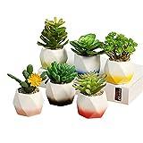MissGarden 3 inch Mini Unique Colored Ceramic Succulent Planter Pot Flowing Glaze Cactus Plant Nursery Pots Container with Drainage for Garden, Deck Railing, Window Sill and Desktop - 6 Pack (3 inch)
