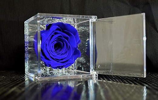 profumata /è una vera e propria Rosa che dura anche piu di 5 anni Rosa Blu 6 Cubo Rosa stabilizzata blu 6cm