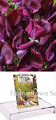 Homegrown Packet Sweet Pea Seeds, 75 Seeds, Black Knight Sweet Pea