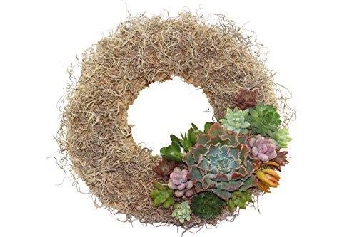 Shop Succulents Living Succulent Wreath: 11 inch Natural