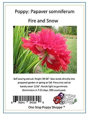 500 Poppy Flower Seeds. Fire N Snow Papaver somniferum. One Stop Poppy Shoppe® Brand.