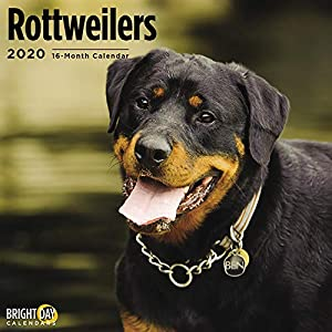 2020 Rottweilers Wall Calendar by Bright Day, 16 Month 12 x 12 Inch, Cute Dogs Puppy Animals Rottie's Canine 12