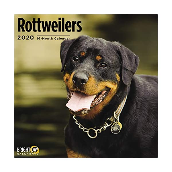 2020 Rottweilers Wall Calendar by Bright Day, 16 Month 12 x 12 Inch, Cute Dogs Puppy Animals Rottie's Canine 1