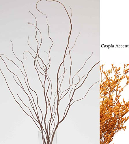 Green Floral Crafts Curly Willow Branches (Bunch of 8 Stems), 4-5Ft Tall, 3-Tone Brown & Caspia