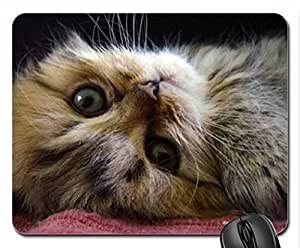 adorable kitty Cute Cool Decorative Design Animal Cat Mousepad Rainbow Designs