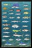Salt Water Game Fish Lamina Framed Poster - 25.75 x 37.75in.