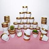 40 Pcs 2.5'' Mini Clay Pots Small Terracotta Pots Pottery Planters Cactus Flower Pot Succulent Nursery Pots - Great for Plants, Crafts, Wedding Favors Baby Shower (Matte White Bisque) (Set of 40)