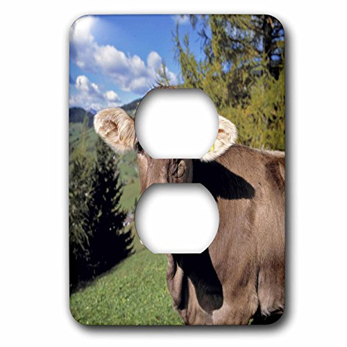 3dRose lsp_82188_6 Italy, Dolomite Alps, Swiss Brown Cow ...
