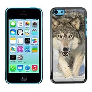 Print Motif Coque de protection Case Cover // V00001719 Lobo de madera // Apple iPhone 5C