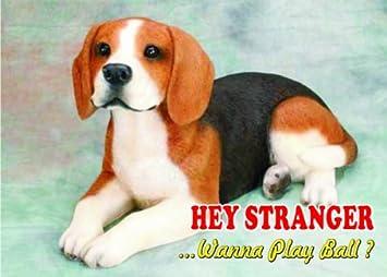 Amazon.com: Atención – Señal Cuidado con/diversión perro sur ...