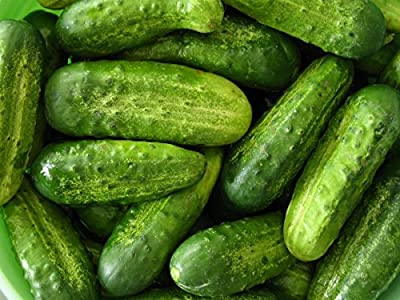 David's Garden Seeds Cucumber Pickling National D2450 (Green) 50 Organic Seeds