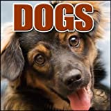 Animal, Dog - Siberian Huskies: Ext: Large Group, Intense Barking And Howling, Dogs, Blockbuster Sound Effects