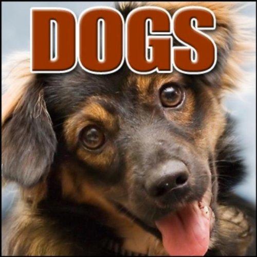Animal, Dog - German Shepherd: Angry Barking, Dogs, (Angry Dog Barking)