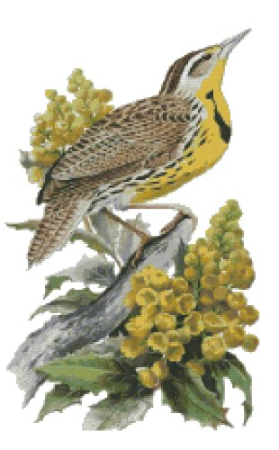 Oregon State Bird (Western Meadowlark) and Flower (Oregon Grape) Counted Cross Stitch Pattern