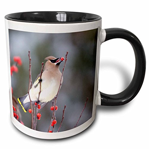 Four Cedar (3dRose mug_208683_4 Cedar Waxwing eating Common Winterberry, Marion Co. IL - Two Tone Black Mug, 11oz)