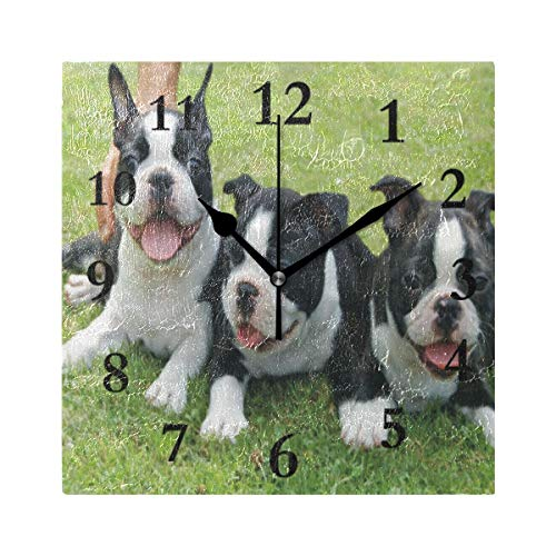 ZHOUSUN Personalized Wall Clock,Three Cute Boston Terrier Puppy Non Ticking Silent Square Acrylic Wall Clocks Easy to Read Home/Office/School Clock